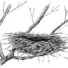 Making Nests In Its Branches